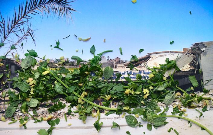 Healing Plants for Hurt Landscapes